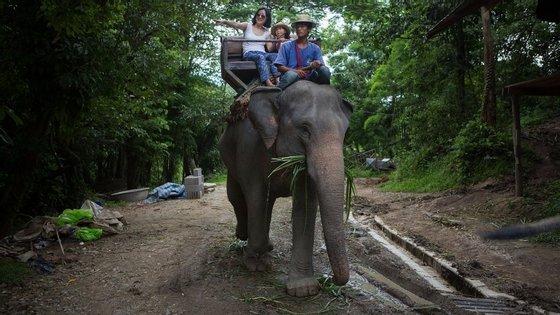Os passeios de elefante são muito populares na ilha de Koh Samui