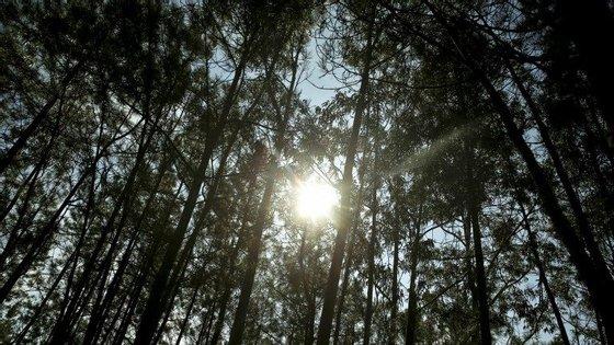 O corpo do recém nascido foi encontrado este sábado perto de Santarém