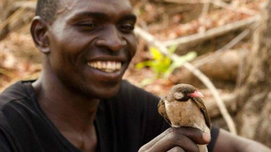 """Um """"guia do mel"""" na mão de um coletor de mel moçambicano"""