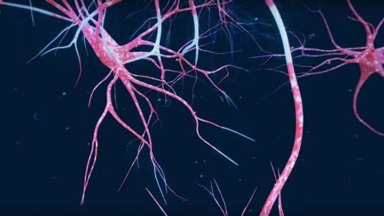 Os neurónios são muito ramificados para estabelecerem muitas ligações