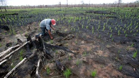 490.000 hectares de floresta intacta desapareceram na China, entre 2000 e 2013