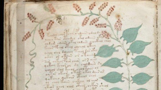 Um pormenor de uma página do manuscrito Voynich