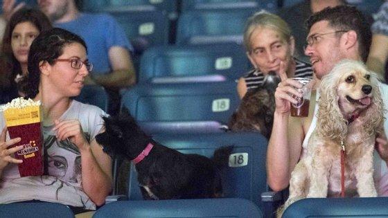 """Os cães israelitas também tiveram direito a acompanhar os donos ao cinema no dia da estreia do filme """"The Secret Life of Pets"""" (2016)"""