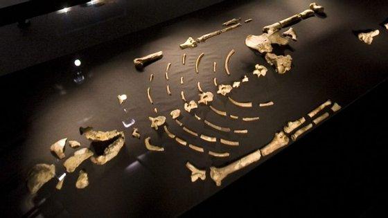 O esqueleto está habitualmente no Museu Nacional da Etiópia, mas foi levado à Universidade do Texas para ser analisado