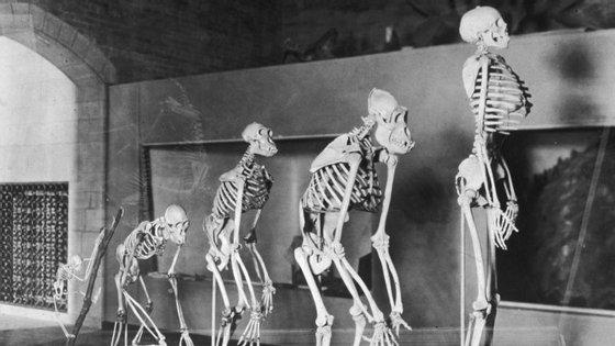 O homem moderno apareceu há 200 mil anos em África, e dispersou-se por todo o globo há 80 mil anos