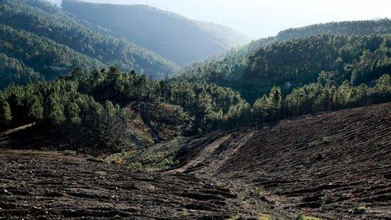Os centristas consideram o investimento na floresta estratégico para a economia