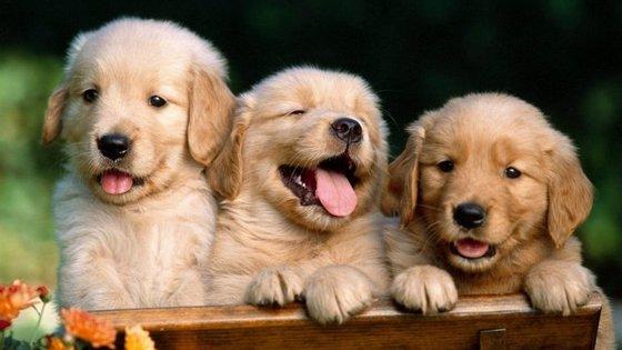 Lisboa vai ter a sua primeira creche para cães, para que os animais não tenham que ficar  sozinhos em casa enquanto vai trabalhar.
