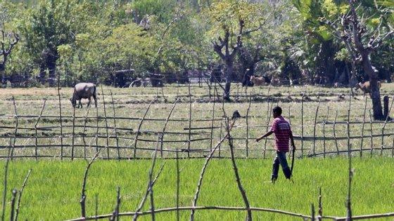 Projeto de Melhoria da Produtividade Agrícola Sustentável visa apoiar pequenos agricultores nas regiões de Ainaro (Belulik), Bobonaro, Ermera, Lautem, Liquiçá e Oecusse