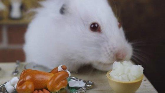 Uma mesa recheada de mini objetos e mini refeições fazem a delícia de Matilda, a hamster