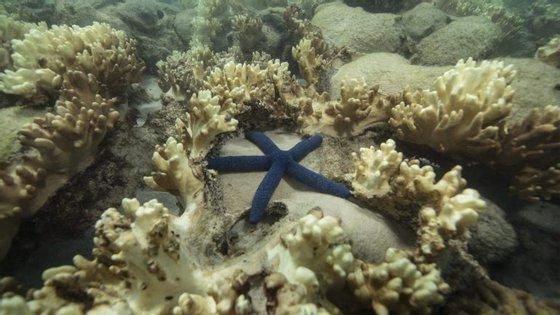 Especialistas estimam que a região norte da Grande Barreira de Coral precisará entre 10 e 15 anos de tempo para recuperar os seus corais