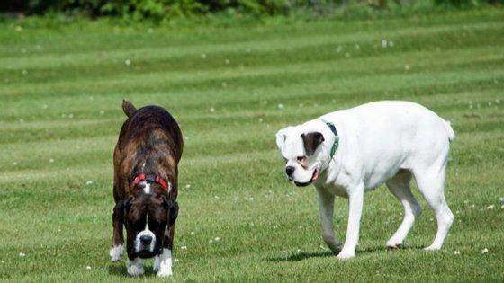 Desde a separação do casal, em abril, que os cães - Kenya e Willow - estão à guarda dos pais da mulher
