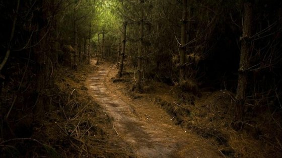 A floresta de Sherwood, com 423 hectares, encontra-se ameaçada pela multinacional química Ineos