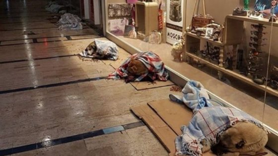 A fotografia dos cães a dormirem em mantas, juntos às montras do centro comercial, tornaram-se rapidamente virais nas redes sociais