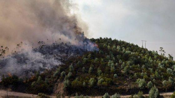 """António Costa referiu que se vai tratar de uma reforma de """"médio prazo"""", cujos efeitos não serão imediatos, e deixou críticas ao passado recente em matéria de política florestal"""