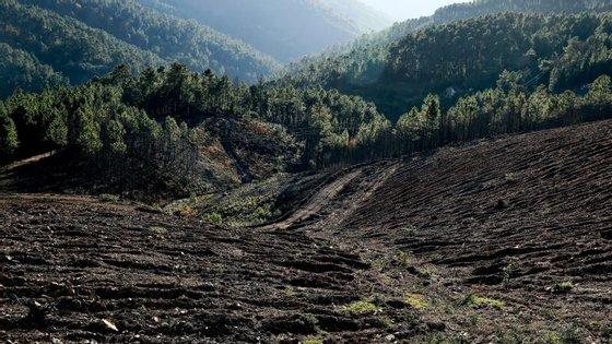 """Amândio Torres falava na abertura do primeiro Fórum Internacional """"Florestas Saudáveis, Benefícios para Todos"""", em Coimbra"""