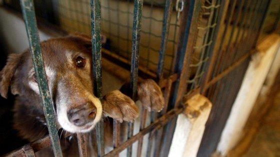 Setúbal foi o distrito onde se registaram mais casos de abandono e maus-tratos de animais em 2016