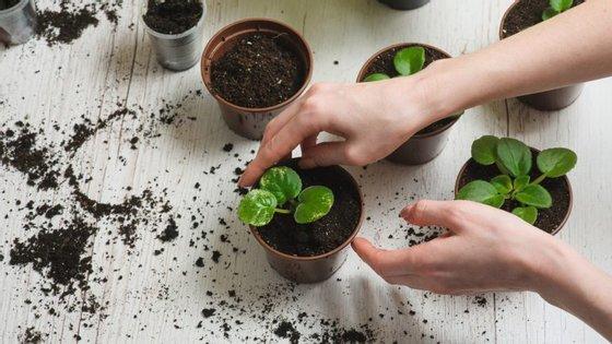 Não desista à primeira adversidade. Dedicar-se à jardinagem é isso mesmo, aceitar avanços e recuos e manter-se firme na tarefa de ver crescer o que plantou.