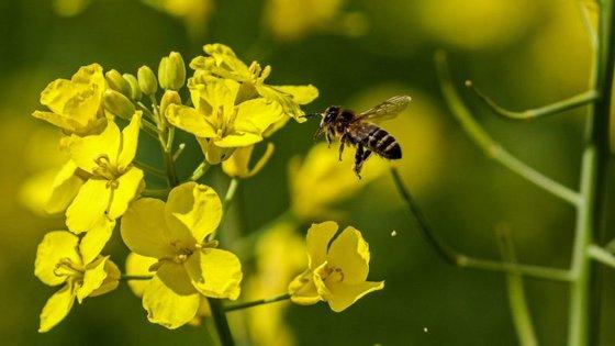 A alergia ao pólen é causa frequente de manifestações alérgicas