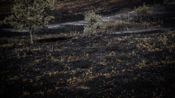 Portugal já teve uma área de quase 120 mil hectares em chamas desde o início do ano