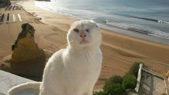 Mr. No Ears desapareceu de Albufeira em setembro de 2015