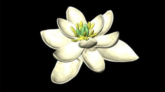 O estudo cruzou 792 espécies vivas de flores