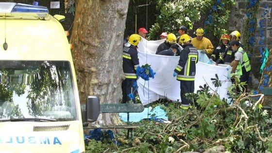 Em agosto de 2010, já tinham morrido duas pessoas no Porto Santo após queda de uma palmeira