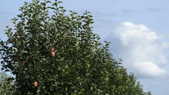 A ideia designa-se 'Walkest - Walk by Forestest', tem o apoio da associação ambientalista Quercus