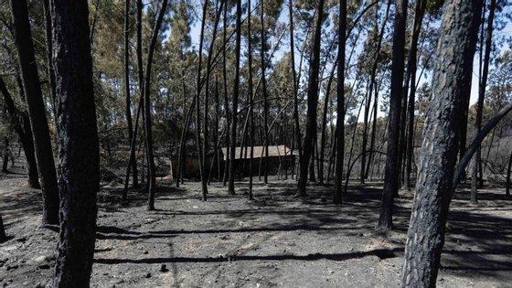 O BE duvida do modelo em vigor, que pretende criar sociedades de gestão conjunta do espaço florestal