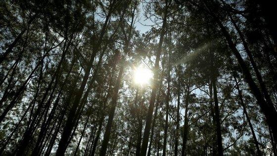 Os ambientalistas defendem que é urgente investir na prevenção na área da floresta