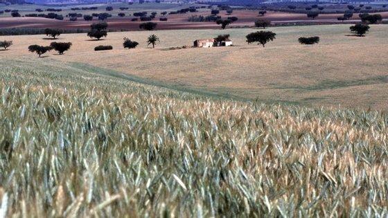 A quebra na produção agrícola deve-se à diminuição do valor da produção animal.