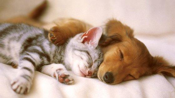 Existem mais de 400 raças de cães - comparadas com apenas 40 de gatos