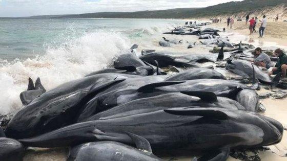 Cerca de 150 baleias-piloto de aleta curta deram à costa na praia de Hamelin Bay, na Austrália (Gian De Poloni/ Twitter)