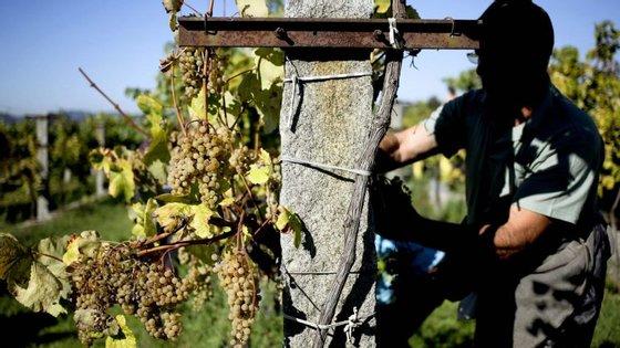 O júri deste concurso distinguiu com ouro 13 vinhos