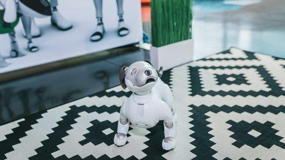Uma das novidades da segunda edição do European Innovation Academy é o Sony AIBOERS-1000, um cachorro robô de inteligência artificial para os visitantes poderem interagir que só se vende no Japão