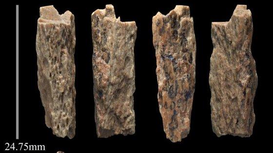 Os fragmentos foram encontrados numa caverna na Sibéria (imagem retirada do Twitter de Tom Higham, um dos investigadores)