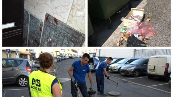 Em Loures, estão em curso intervenções para o controlo da praga de baratas