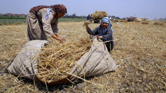 Cerca de 820 milhões de pessoas estão desnutridas, refere o relatório divulgado pela FAO