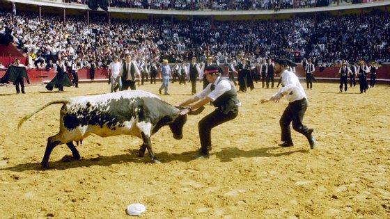 """""""Pegar o torno pelos cornos"""" é a expressão usada para quem enfrenta um problema bicudo. A PETA quer tirar o touro desse quadro"""