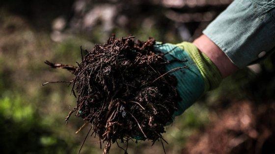Jorge trabalha, na sua horta comunitária através do processo de compostagem promovido pela Câmara Municipal de Lisboa, em Alvalade, 3 de dezembro de 2018