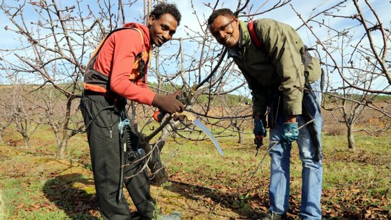 Gebru Mehari e Hadush Tsegay são naturais da Eritreia e trabalham no Fundão