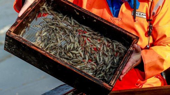 Portugal e Espanha compram 82% do camarão pescado nas águas moçambicanas