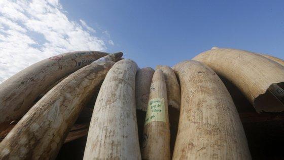 A Polícia moçambicana deteve os homens na posse de sete pontas de marfim, 40 quilos de pedras preciosas e notas falsificadas