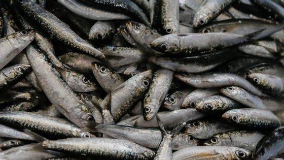 """Um lote de 24.576 latas de conserva de sardinha em azeite foi retirado do """"stock"""""""