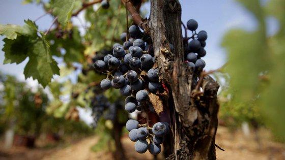 Ao todo serão 190 as indicações geográficas a serem preservadas, incluindo os vinhos do Porto, Douro, Dão, Bairrada, Vinho Verde, Alentejo, Madeira e o Queijo de S.Jorge