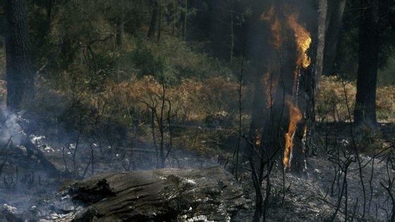 O incêndio chegou a ser combatido por 106 operacionais apoiados por 28 veículos e três meios aéreos