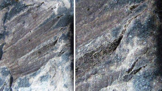 O fóssil foi descoberto na mesma escavação onde já foram identificadas outras quatro novas espécies