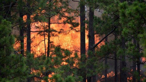 Crescimento é ligado aos incêndios rurais de 2017, às altas temperaturas e a ventos fortes registados no mesmo período