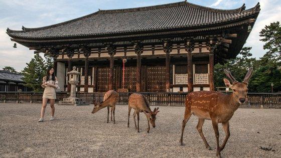 Os cerca de 1.300 veados que vivem no parque nacional de Nara são uma atração turística da cidade, ex-capital do Japão