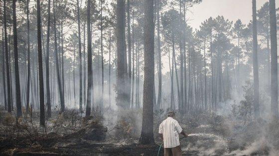 A 15 de outubro de 2017 foram registados dois fogos no Pinhal de Leiria. Arderam 9476 dos 11 mil hectares