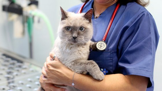 Cães, gatos e furões devem fazer o registo no Sistema de Informação de Animais de Companhia